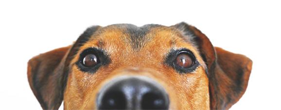 Dog Grooming Wokingham